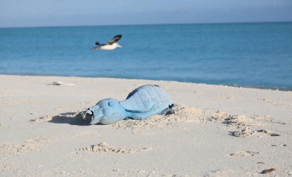 Initiatives Océanes : Organisez ou participez à une collecte de déchets !